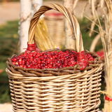 Cranberry Photo : Thanksgiving Day - Stock Photos Royalty Free Stock Photography