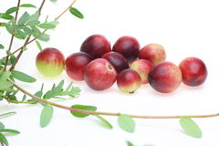Cranberry Royalty Free Stock Photos