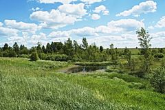 Cranberry place. Meadows and expanses of theEuropean part of Russia Stock Photo