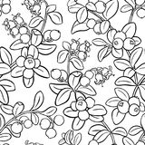 Cranberry seamless pattern. Cranberry plant seamless pattern on white background Royalty Free Stock Photos