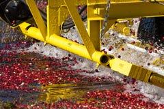 Cranberry potrząsalna maszyna Zdjęcie Royalty Free