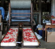 Cranberry Processing Machine Royalty Free Stock Photos