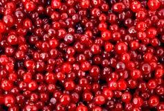 Cranberry Stock Image