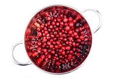 Cranberry in the round colander isolated. Fresh cranberry in the round colander made in studio isolated on white background Stock Photo