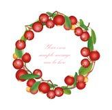 Cranberry round frame isolated on white background. Royalty Free Stock Photo