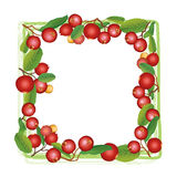 Cranberry round frame isolated on white background. Royalty Free Stock Photography