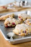 Cranberry Scones Stock Photography