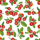Cranberry seamless background. Ripe red cranberries with leaves. Vector illustration. Royalty Free Stock Images