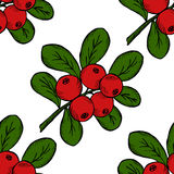 Cranberry, seamless pattern 2. Сowberry with leaves and branches.  Illustration doodle sketch hand-drawn bunch of ripened lingonberry. Seamless pattern. Vintage Royalty Free Stock Image