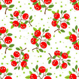 Cranberry seamless pattern. Stylized cranberry on a white background. Seamless pattern Royalty Free Stock Photos