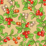 Cranberry seamless pattern. Cranberry vector seamless pattern on color background Stock Photos