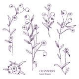 Cranberry set. Detailed hand drawn branches with berries. Black and white hand drawn illustrations. Royalty Free Stock Images