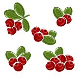 Cranberry set. Vector Stock Images
