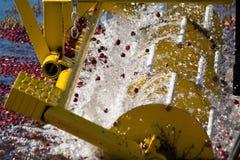 Cranberry shaking machine Royalty Free Stock Images
