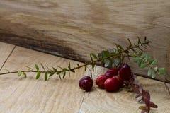 Cranberry Royalty Free Stock Photo