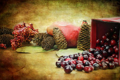 Cranberry Still Life. Photo based illustration of a red Christmas box spilling out fresh cranberries with pine cones an pomegrantes in the background Royalty Free Stock Photo