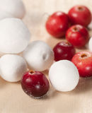 Cranberry in a sugar powder Stock Images