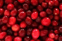 Cranberry texture Stock Photos