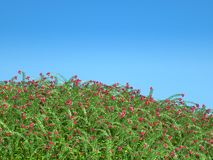 Cranberry thicket and blue sky. Healthy lifestyle Royalty Free Stock Photos