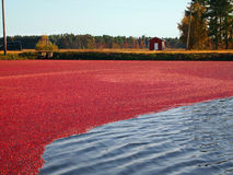Cranberry Tide Royalty Free Stock Image