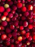 cranberry Tranbärbakgrund många bakgrundsklimpmat meat mycket royaltyfria bilder