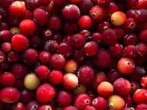 cranberry Tranbärbakgrund många bakgrundsklimpmat meat mycket arkivfoto