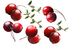 Cranberry by two with stalks, leaves, paths Stock Images