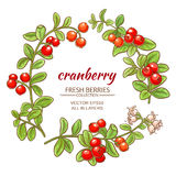 Cranberry vector set. Cranberry branches vector set on white background Royalty Free Stock Images