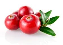 Cranberry w zbliżeniu zdjęcie royalty free