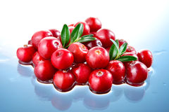 Cranberry in water royalty free stock photography