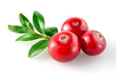 Cranberry on white Royalty Free Stock Photos
