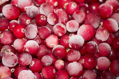 Cranberry. Winter frozen cranberries in hoarfrost royalty free stock image