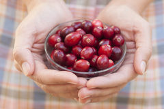 Cranberry in woman's palms. Cranberry in a glass bowl in woman's palms Stock Image