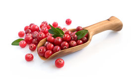 Cranberry with wooden scoop. Isolated over white Stock Image