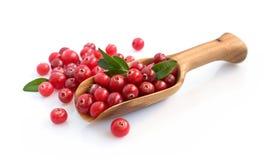 Cranberry z drewnianą miarką Obraz Stock
