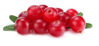 Cranberry z liśćmi odizolowywającymi na bielu Z ścinek ścieżką Pełna głębia pole zdjęcie stock