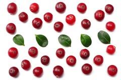 Cranberry z liśćmi odizolowywającymi na bielu Z ścinek ścieżką Pełna głębia pole zdjęcia royalty free