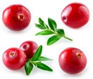 Cranberry z liściem. Kolekcja na białym tle obraz royalty free