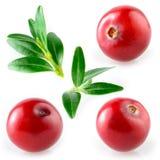 Cranberry z liściem. Kolekcja na białym tle zdjęcia stock