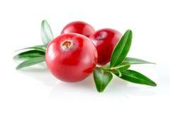 Cranberry z liściem na białym tle obraz stock