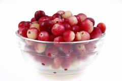 cranberrymaträtt arkivfoto