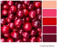 Cranberrypalett Royaltyfria Foton