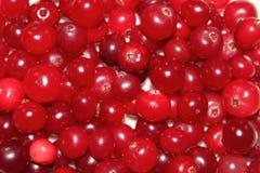 cranberryred Royaltyfria Foton