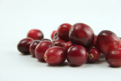 cranberrystapel Arkivbilder
