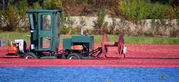 Cranberryt harvesting. Saint-Louis-de-Blandford Quebec Canada 10 06 16: Cranberry farm water management harvesting in Saint-Louis-de-Blandford located on the Stock Image