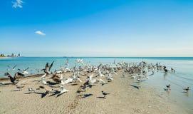 Crandon Park Beach Royalty Free Stock Photos