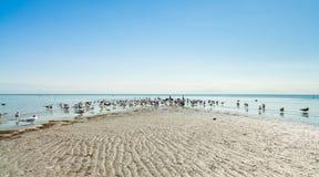 Crandon parkerar stranden royaltyfri fotografi
