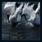 Crane(4) Stock Image