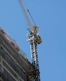 crane Obrazy Royalty Free