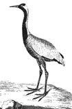 crane ilustracja wektor